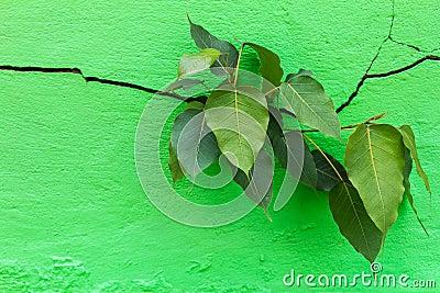 Bodhi cracks wall