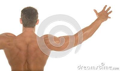 Body builder back