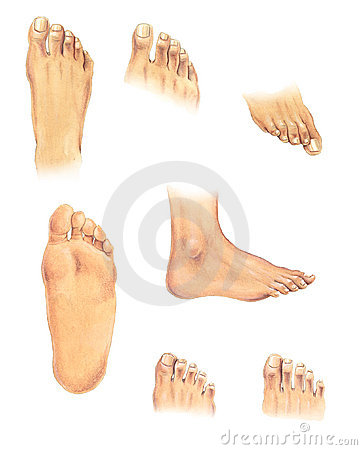 Body parts: feet