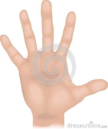 Body parts hand