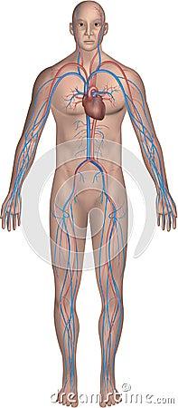 Body system series 2