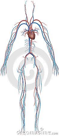 Body system series 9