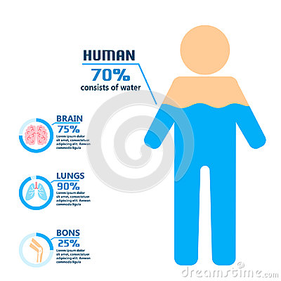 Body water drink infographics health people diet lifestyle concept brochure infochart vector illustration Vector Illustration