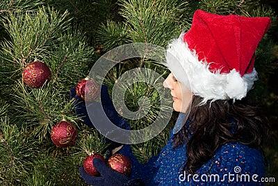 Boże narodzenia target2371_0_ drzewa