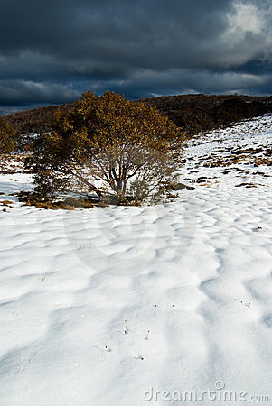 Bogong High Plains