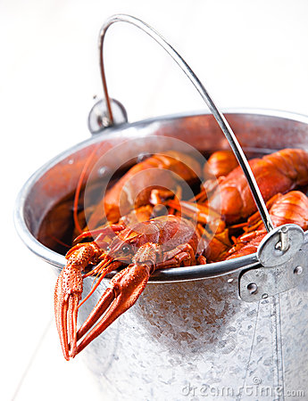 Boiled lobsters in bucket