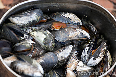 Boiled mussels closeup