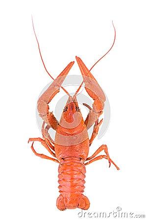 Free Boiled Red Crawfish Stock Photos - 39146363