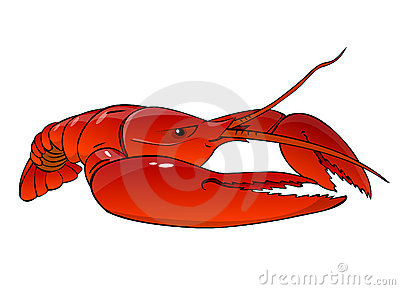 Boiled  red lobster