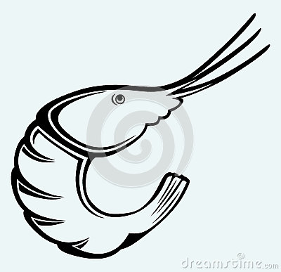 Free Boiled Shrimp Sketch Royalty Free Stock Photography - 37859097