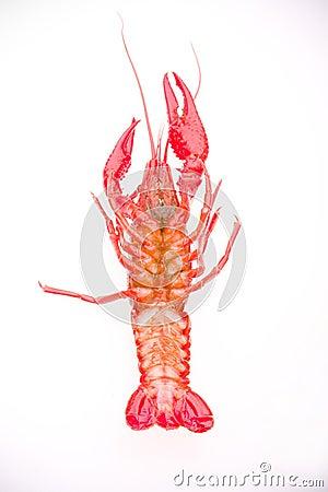 Boiled whole crayfish