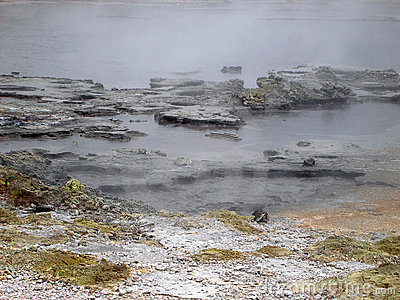Boiling Pools of Geothermal Activity, New Zealand