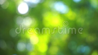 Bokeh światła słonecznego jaśnienie przez liści zdjęcie wideo