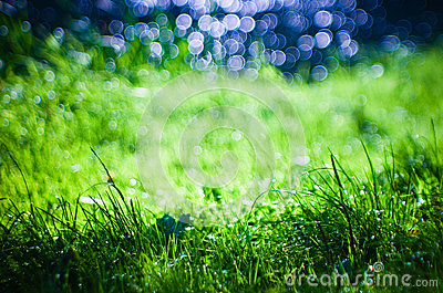 Bokeh in fresh grass