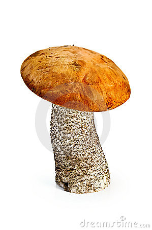 Boleto do alaranjado-tampão do cogumelo