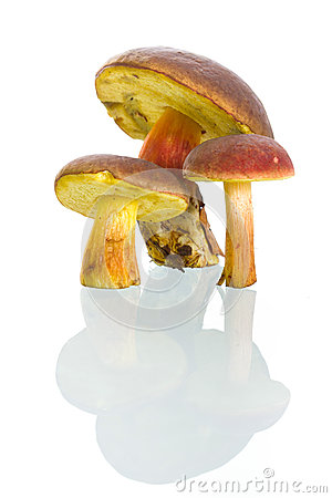 Boletus badius mushrooms with reflection