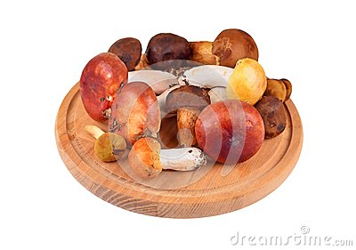 Boletus edulis mushroom on wooden board