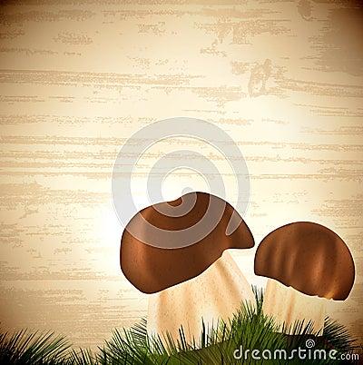Boletus edulis mushrooms