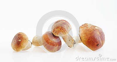 Boletus on light background
