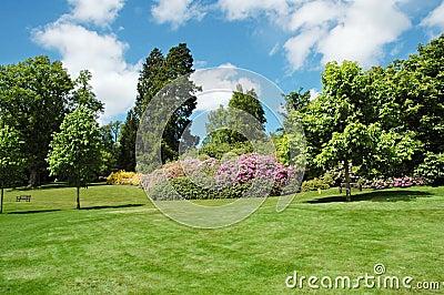 Bomen en gazon op een heldere de zomerdag