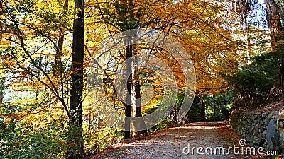 Bomen in glorieuze herfstkleuren stock footage