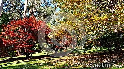 Bomen in glorieuze herfstkleuren stock videobeelden