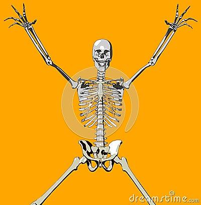 Bone 105