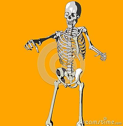 Bone 146