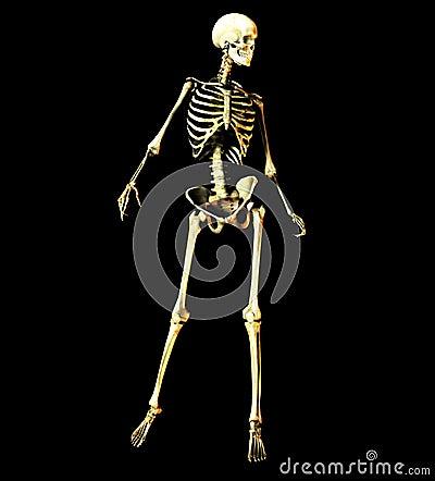 Bone 15