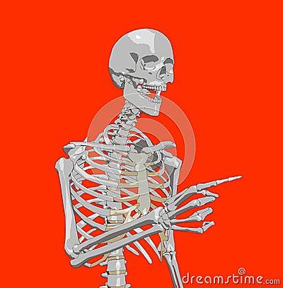 Bone 223