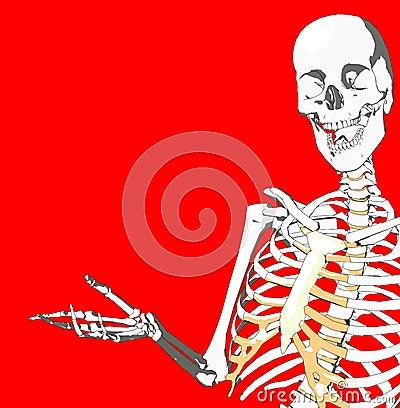 Bone 231
