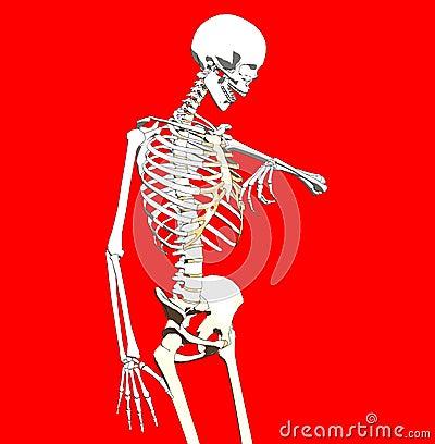 Bone 238