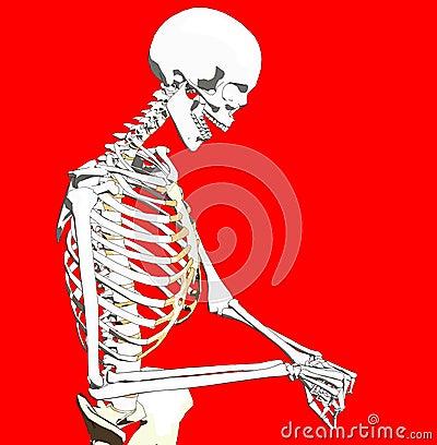 Bone 241