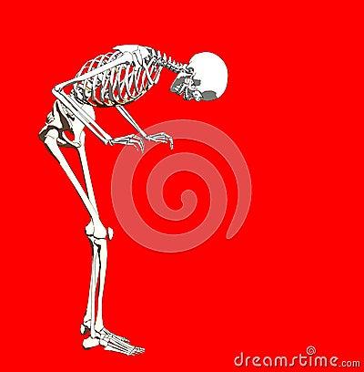 Bone 250