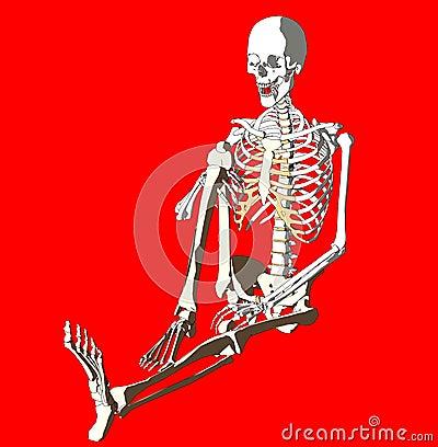 Bone 260