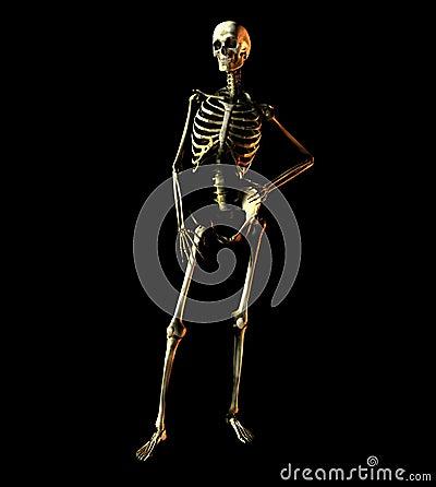 Bone 31