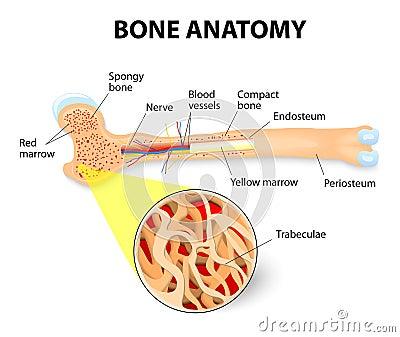Geodesic Topological Analysis of Trabecular Bone ...