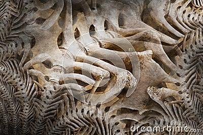 Bone dinosaur