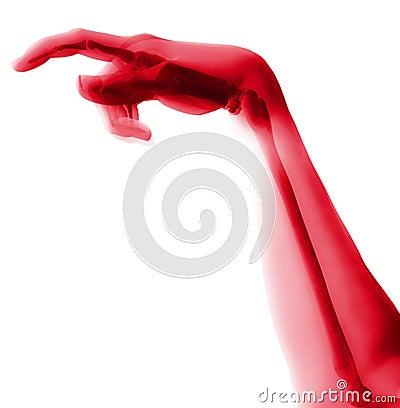 Bone Hand 12