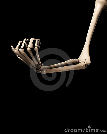 Bone Hand And Arm