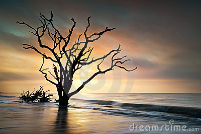 Bone Yard Sunrise Botany Bay Beach Edisto Island
