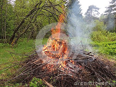 Bonfire on the forest  edge