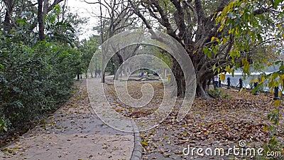 Bonito Parque de outono à luz do sol Caminho florestal coberto por árvores de queda multicolorido folhas foliadas caídas na prima video estoque