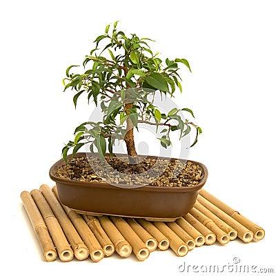 Free Bonsai Stock Photos - 2305993
