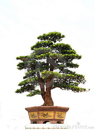 Free Bonsai Stock Photo - 4272270