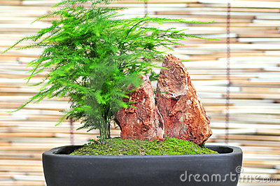 Bonsai in the bowl
