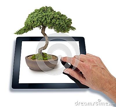 Bonsai Computer Tablet Business