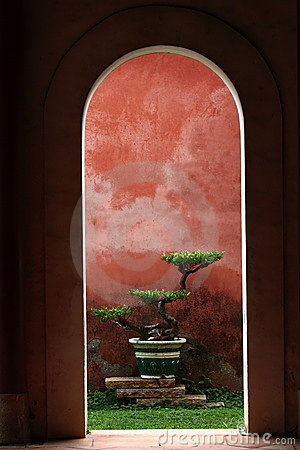 A Bonsai in Confucius,s temple