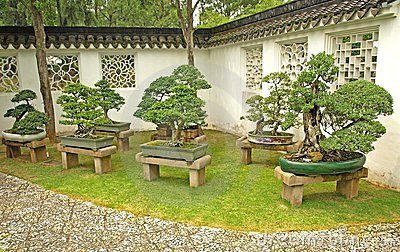 Bonsai on display