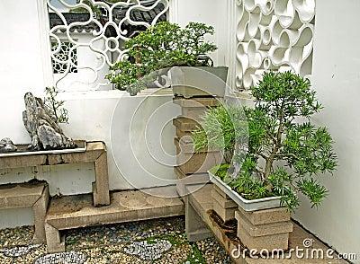Bonsai on display